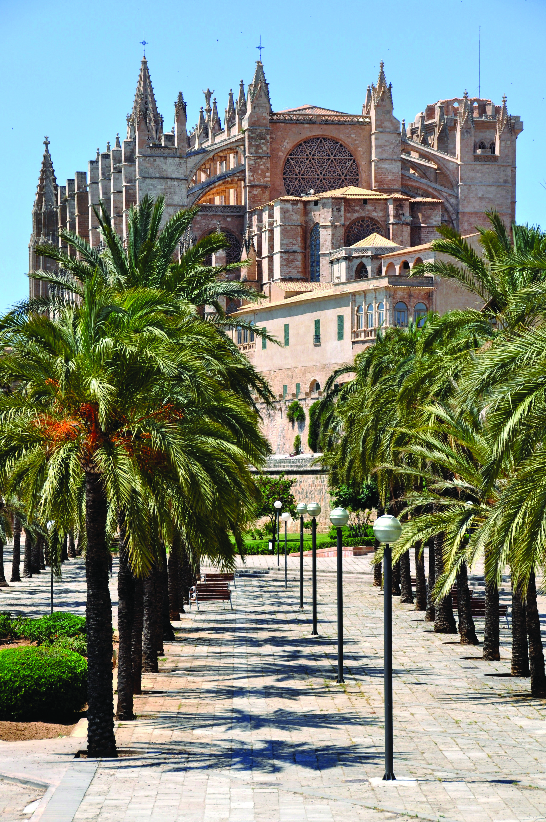 A walkway lined with palm trees and an impressive building in the background