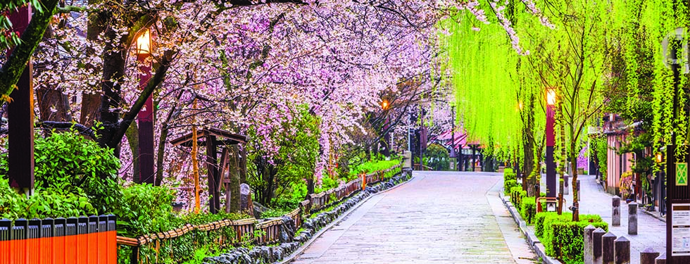 A path with native cherry blossom trees leads into a Japanese village.