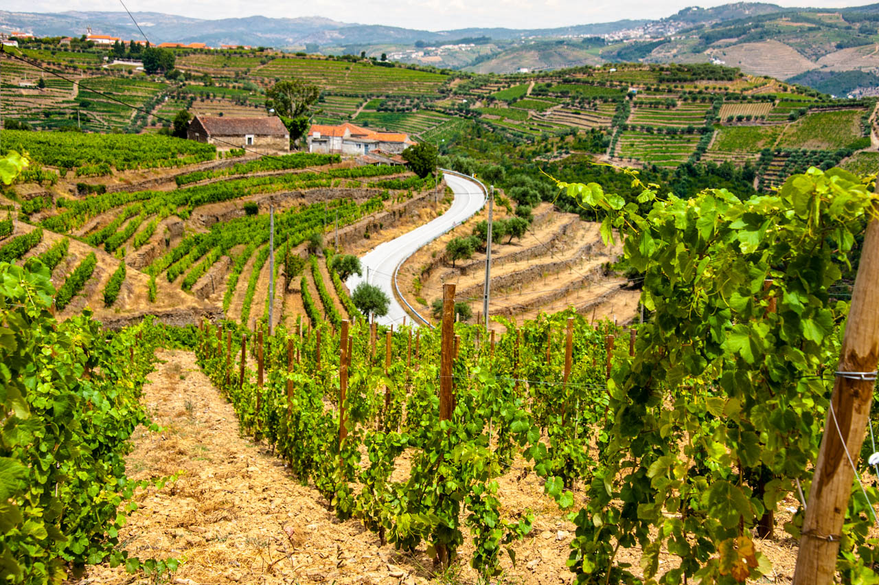 Landscape of bountiful vineyards. classic buildings and a winding road.