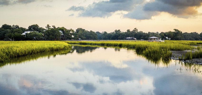 South Carolina Landscape